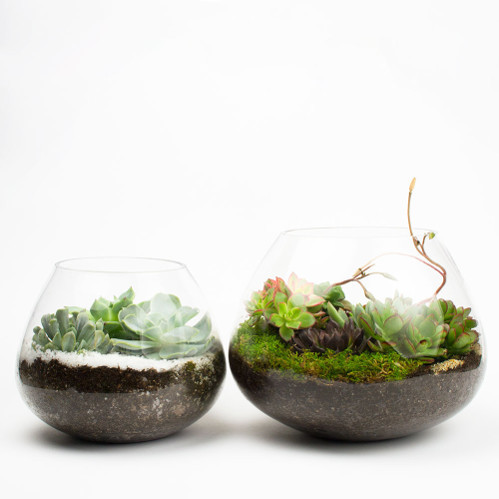 Diy succulent kits garden europe drought tolerant succulents are all the rage and juicykits has creative diy kits that make succulent terrariums fun and easy to do it yourself solutioingenieria Image collections